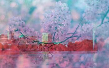 Japanisches Kirschblütenfest in Hamburg 2017