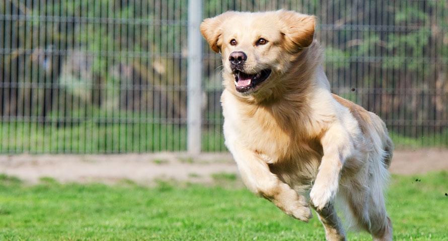 Glücklicher Hund im Tierheim Süderstraße Hamburg