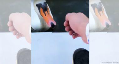 Schlägt Rapper Gzuz hier einen Alsterschwan?