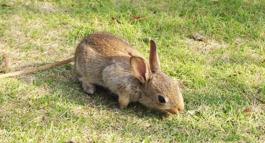 Ein kleiner Hase auf der Grünfläche