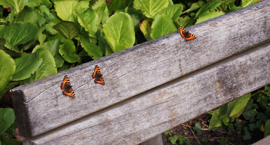 """Viele Schmetterlinge tummeln sich in """"Hamburgs grünen Herz"""""""